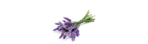 Encens Aromathérapie